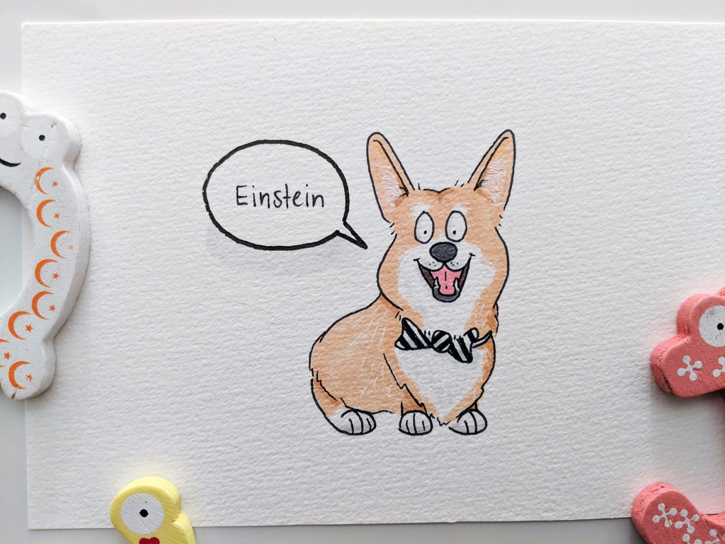 Einstein the Corgy wearing a black and white bow tie