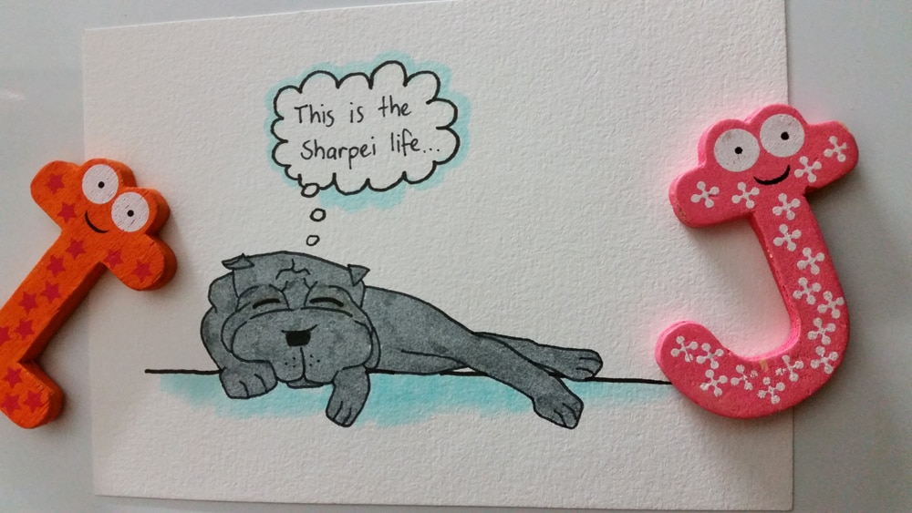 "Cilla the blue Shar Pei is having a rest on a nice sunny day. The little thought bubble reads: ""This is the Shar Pei life""."