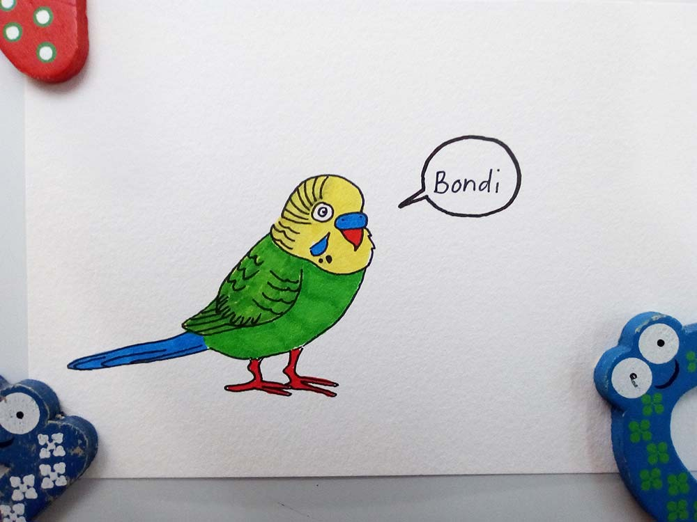 Drawing of Bondi the budgerigar